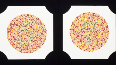 Have Red-Green Color Blindness? Tell 'Nightline'