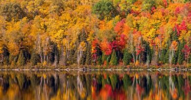 fall-colors-cvd-vs-normal